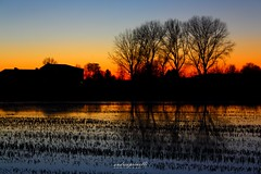 The sound of silence (andreaprinelliphoto) Tags: andreaprinelliphoto andreaprinelli prinelli winter inverno sunset december dicembre tramonto crepuscolo sun risaia campagna sound silence thesoundofsilence