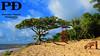 Dog na Praia (Pétruzz Ðias Fotografias) Tags: laranjal pelotas praia riograndedosul balneáriodosprazeres rs