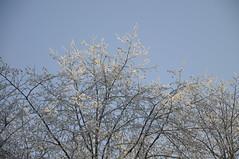 _TRW7459 Sunshine on Frosted Trees (terrificphotos) Tags: juneauaalaska twinlakes dogs frost trees raven evergreen icecrystals hockey