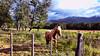 Caballito (Miradortigre) Tags: caballo horse chile patagonia aysen