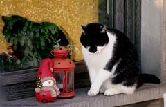 Winter (Natali Antonovich) Tags: winter tervuren belgium belgique belgie nature christmasholidays christmas shadows reflection cat animal decor parallels