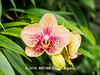 Duke Farms-7013015-2 (myobb (David Lopes)) Tags: dukefarms hillsborough nj newjersey nature olympus em1 omd