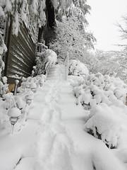 Snowy House Steps - Snowpocalypse 2017_26