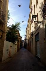 envol (El Datou) Tags: arquitectura exterior edificio calle animaux animal oiseau bird envol envoler fly voler