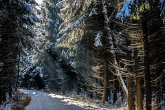 Winter Wonderland (*Capture the Moment*) Tags: 2017 backlight backlit bäume dunst forest fotowalk frost gegenlicht landschaften licht schnee snow sonnenstrahlen sonya7m2 sonya7mii sonya7mark2 sonya7ii sonyfe2890macrogoss sonyilce7m2 trees wald wetter winter