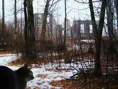 Cat and Haunted House (Brian 104) Tags: digitalart cat hauntedhouse winter composite ilobsterit
