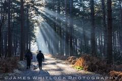 Winter Walk (James Whitlock Photography) Tags: uk england berkshire bracknell swinley forest winter sun rays mist frost walk hike dog track ferns pine wood nikon d810
