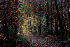 Back In Autumn (clé manuel) Tags: autumn woods forest wald sunrays herbst leaves laub laubwald nature sonyalpha sony sonnenstrahlen herbstwald