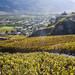 Vineyards in Sion