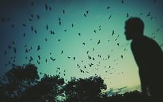 El Niño Distante II (J.J.Evan) Tags: blue trees boy sunset portrait sky naturaleza man nature argentina up field birds azul clouds pose de atardecer person persona fly flying high wings movement nikon san árboles mood moody dof child looking dusk expression retrato f14 14 aves movimiento pájaros cielo alas nubes campo chico nikkor córdoba alto niño depth hombre pdc d800 mirando arriba volando atmósfera volar basilio expresión profundidad