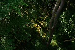 Change of Perspective (martinstelbrink) Tags: trees sun zeiss germany 50mm thüringen sony thuringia sonne bäume planar urwald f20 canopywalkway primevalforest nationalparkhainich baumkronenpfad a7r zeissplanar50mmf20 worldnatureheritage alpha7r voigtländervmeclosefocusadapter haininch