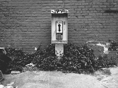 IMG_4335 (lukesewardphoto) Tags: hello urban abandoned overgrown lost weeds phonebooth kentucky explore louisville goodbye urbex