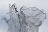gnarled plastic (primemundo) Tags: plastic waterbottle depthoffield bent mangled shredded destroyed