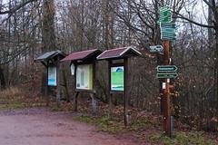 Rennsteig (dieter.steffmann) Tags: eisenach rennsteig hohesonne thüringerwald