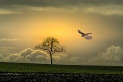 Clouds behind the ground (hardy-gjK) Tags: landscape paysage lanschaft baum tree abre kestrel falke bird vogel oiseau nikon hardy sonne sun sole wolken clouds nuages saariysqualitypictures