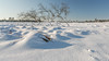 Winter in het nationaal Park De Loonse en Drunense Duinen (Wim Boon (wimzilver)) Tags: nationaalparkdeloonseendrunenseduinen canoneos5dmarkiii canonef1740mmf4lusm wimzilver wimboon landscapephotography sneeuw snow landschap winter canon polarisatiefilter polafilter