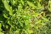 P1780244.jpg (brianduncan) Tags: garden malika atlas domaine chilli
