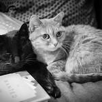 Cats & Books thumbnail