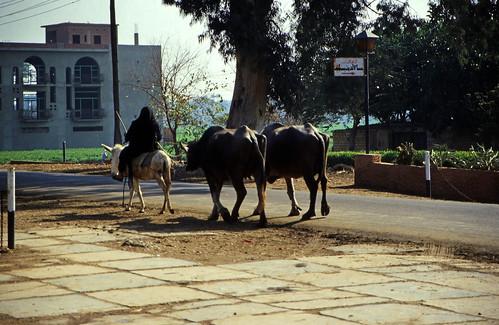 """Ägypten 1999 (556) Kairo: Fahrt zurück nach Kairo • <a style=""""font-size:0.8em;"""" href=""""http://www.flickr.com/photos/69570948@N04/31865406045/"""" target=""""_blank"""">View on Flickr</a>"""