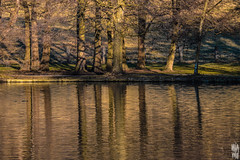 REFLECT (Welcome in a wild world) Tags: reflect vegetation lake nature water miror tree trees wood forect winter cold colder serenity epic france foret arbre reflet lac land landscape paysage