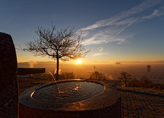 Fountain and Tree (eichlera) Tags: sunrise dawn morning sun sunlight sky tree fountain city zurich switzerland waid fog gold blue