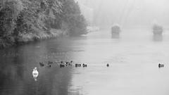 Parc du Château de Rambouillet (HellAir) Tags: parcduchâteauderambouillet 2016 rambouillet frozen givre hiver winter blackandwhite