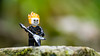 The Ghostrider in Norway (Reiterlied) Tags: 105mm bergen d5200 dslr ghost ghostrider guitar lego legography lens macro marvel minifig minifigure nikon norway photography prime reiterlied rider sigma stuckinplastic toy