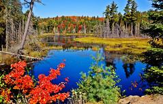 Algonquin Park in Fall, Ontario, Canada (klauslang99) Tags: nature naturalworld northamerica canada klauslang algonquin park fall autumn lake wilderness outdoor