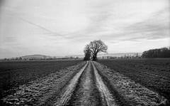 (salparadise666) Tags: kiev 4a jupiter12 35mm agfa apx100 caffenol rs 13min nils volkmer vintage camera rangefinder russian germany niedersachsen hannover region landscape nature rural bw monochrome