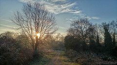 Raise your arms and find new hope (OR_U) Tags: 2017 oru uk surrey hersham hershamriversidepark morning walk path tree sunshine sun winter cold park sunrise mobilephotography widescreen 169 antientertainers