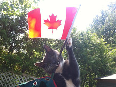 Happy Canada Day (ndh) Tags: cats ontario canada animals ottawa canadaday catniss