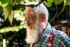My Grandfather (mattosberger) Tags: santa old portrait people man home face garden schweiz gesicht outdoor grandfather bart grandpa menschen wise thun garten schweizer velho vieux avo berger weisheit grandpere sabedoria grossvater hünibach