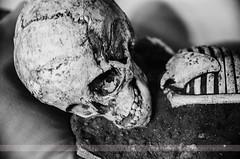 Skull, Amman, Jordan (Seven Seconds Before Sunrise) Tags: travel bw skull asia citadel amman middleeast jordan ammancitadel jordanmuseum