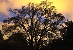 i love this tree (patri aragon) Tags: landscape paisaje treehouse ilovethistree patriciaaragonmartin