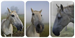 horse poses (patrick.verstappen) Tags: summer horse animal collage photo yahoo google nikon flickr belgium image sweet pat sigma juli poses facebook picassa gingelom ipernity d5100 pinterest ipiccy picmonkey