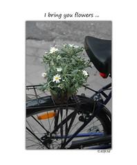 Where have all the flowers gone? (allfr3d) Tags: street flowers flower nature strange bike nikon details transport streetphotography streetphotographer allfr3d