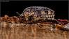 0O1A4072 (kth_friend) Tags: glenroy windsor bugs