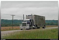 """Peterbilt 389 """"Larson"""" (uslovig) Tags: peterbilt 389 larson 60 102 cattle trailer vieh auflieger usa landstrase country road telegraph pole telegrafen mast"""