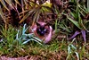 Gatto (eumag) Tags: gatto cat natura nature feline felino nikon nikond3100 allaperto outdoor