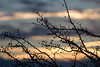 Against the sky (ArtGordon1) Tags: sunset winter sky clouds cloud silhouette silhouettes branches walthamstow london england uk davegordon davidgordon daveartgordon davidagordon daveagordon artgordon1