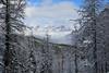 Winter Wonderland in the Rockies (lfeng1014) Tags: winterwonderlandintherockies winterwonderland canadianrockies lakeohara hikingtrail alpine snow yohonationalpark britishcolumbia misty canada pinetrees canon5dmarkiii travel lifeng ef1635mmf28liiusm
