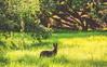 Black Dog on beautiful grassland@Wuling Farm, Taiwan.武陵農場草地上的黑狗~ (Evo-PlayLoud) Tags: canoneos550d canon550d canon 550d efs18135mmf3556 efs 18135mm 18135mmkit grass landscape scenery taichung taiwan green 台中 台灣 武陵農場 wulingfarm 風景 風景照 雪霸國家公園 雪霸 tree trees sunlight lightfantasy hdr grassland dog 狗 sunshine lightshadows