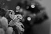 Sparks ((( n a t y ))) Tags: sparks shiny bokeh dof plant flower bloem estambres stamen 50mm canon eos6d beautiful bouquet bos mooi ramo magical light inside indoor composition design binnen winter invierno planta ice cold