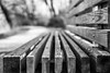 bench lines (kderricotte) Tags: bench lines 35mm18 sonya6000 blackandwhite bokeh depthoffield monochrome texture