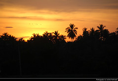 Sunset, Tissamaharama, Sri Lanka (JH_1982) Tags: tissamaharama තිස්සමහාරාමය tissa palm tree palms trees silhouette silhouettes red yellow orange glow cloud clouds cloudy landscape scenery scenic sunset ocaso sonnenuntergang coucherdesoleil pôrdosol tramonto закат zonsondergang zachódsłońca solnedgång solnedgang auringonlasku apus залез matahariterbenam mặttrờilặn 日落 日没 evening sun light sri lanka ශ්රී ලංකා இலங்கை 斯里蘭卡 スリランカ 스리랑카 шриланка سريلانكا श्रीलंका ประเทศศรีลังกา