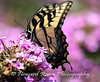 Mercer County Gardens (120) (Framemaker 2014) Tags: fernbrook farms chesterfields new jersey mercer county united states america