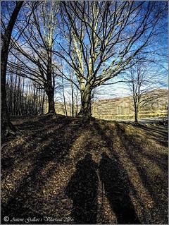 El bosc de les ombres diabòliques. (Santa Fé - Montseny - Catalunya) EXPLORE - 28-12-2016.