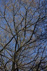 Untitled (lir segev) Tags: hardlight trees spring outdoor czechrepublic prague nature czechia harshlight