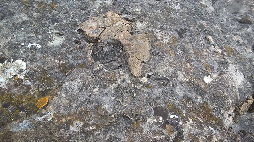 Ubley Warren - Fossils