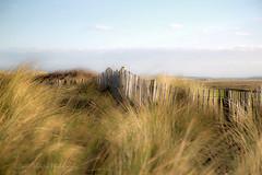 Dune (Dave Hilditch Photography) Tags: norfolk brancaster brancasterbeach dunes grass nature flora greatphotographers landscape magicunicornverybest daarklands